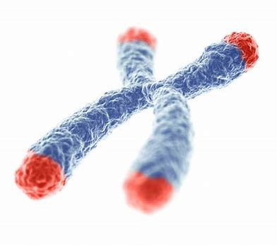 Your Telomeres and Your Lifestyle: Slowing Down the Aging Process